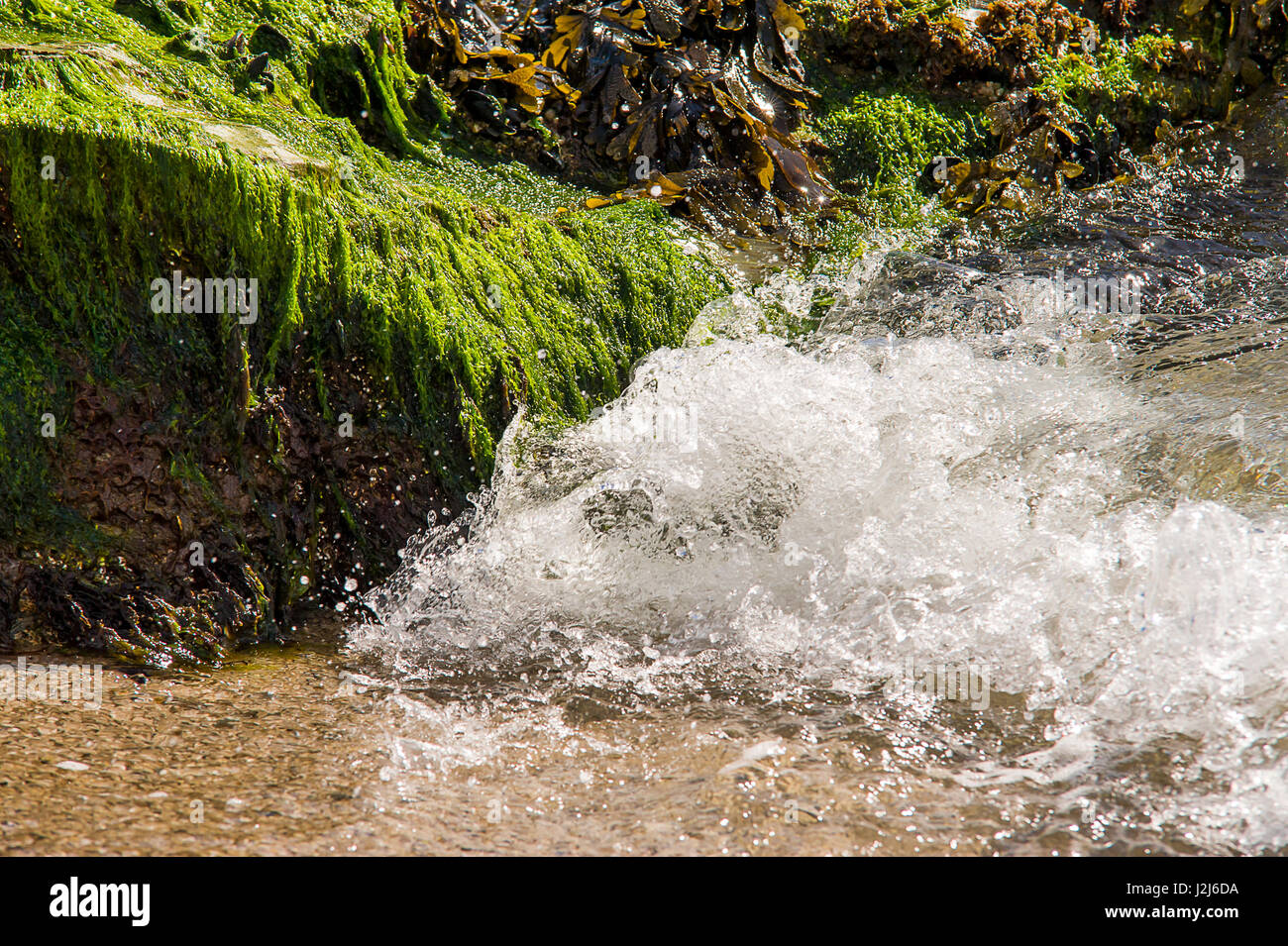 Seaweed and Algae bathing in glorious spring sun along the Cornish Coastline in Par - Stock Image
