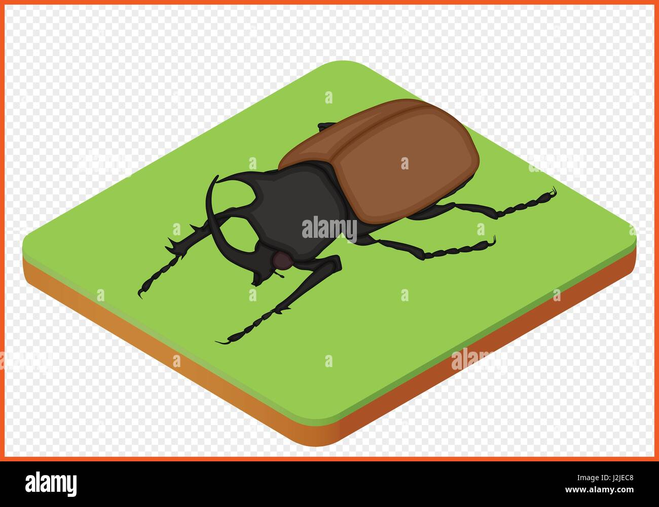 beetle vector eps - Stock Vector