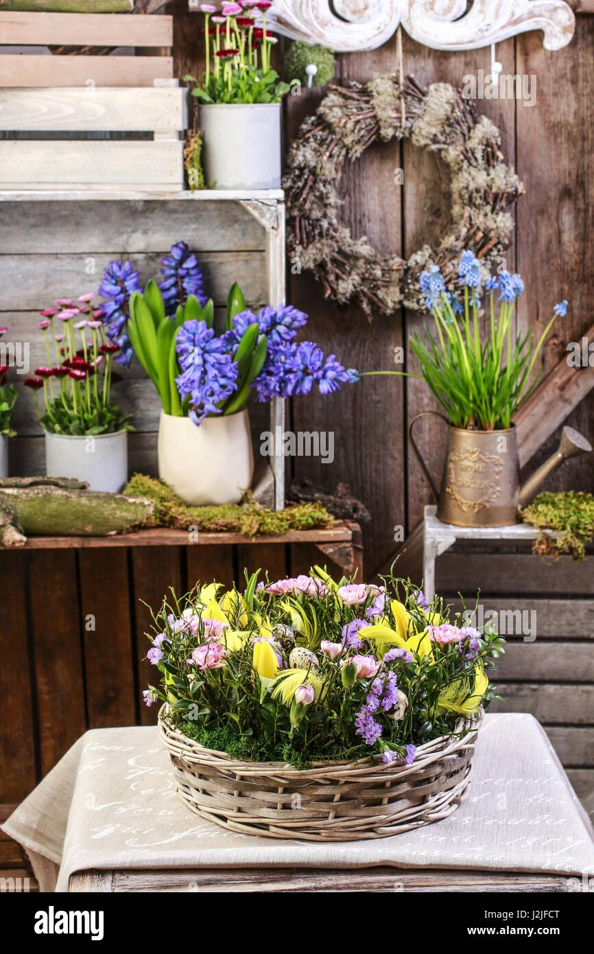 Basket with daffodils, carnations and buxus. Easter floral arrangement. - Stock Image
