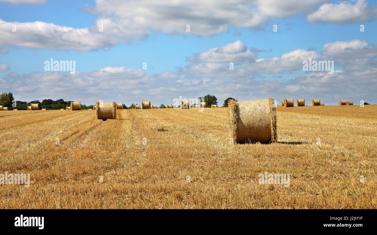 An English Rural Landscape with field of golden wheat stubble and round hay bales Stock Photo