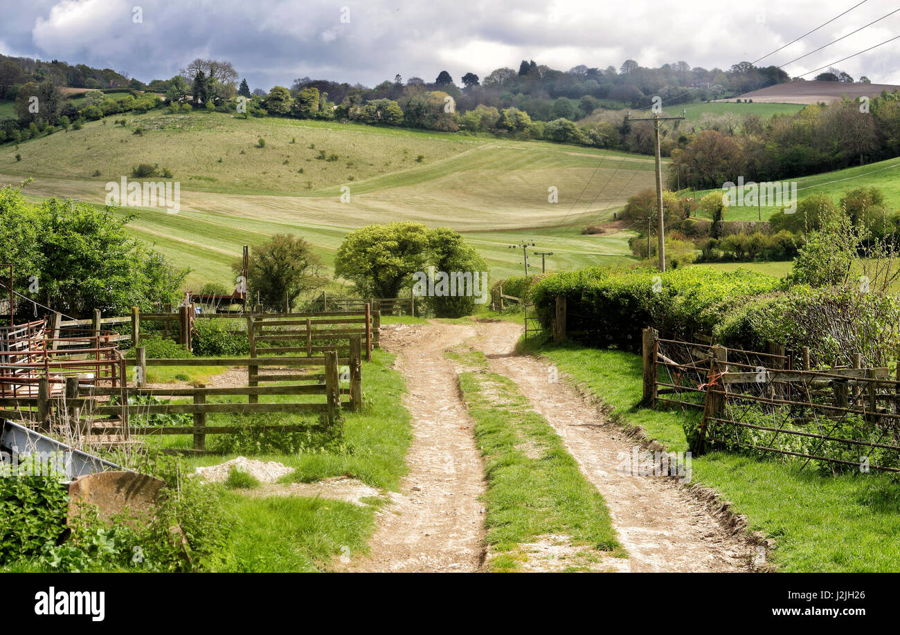 Spring Landscape in the Chiltern Hills in England with Farm track between fields - Stock Image