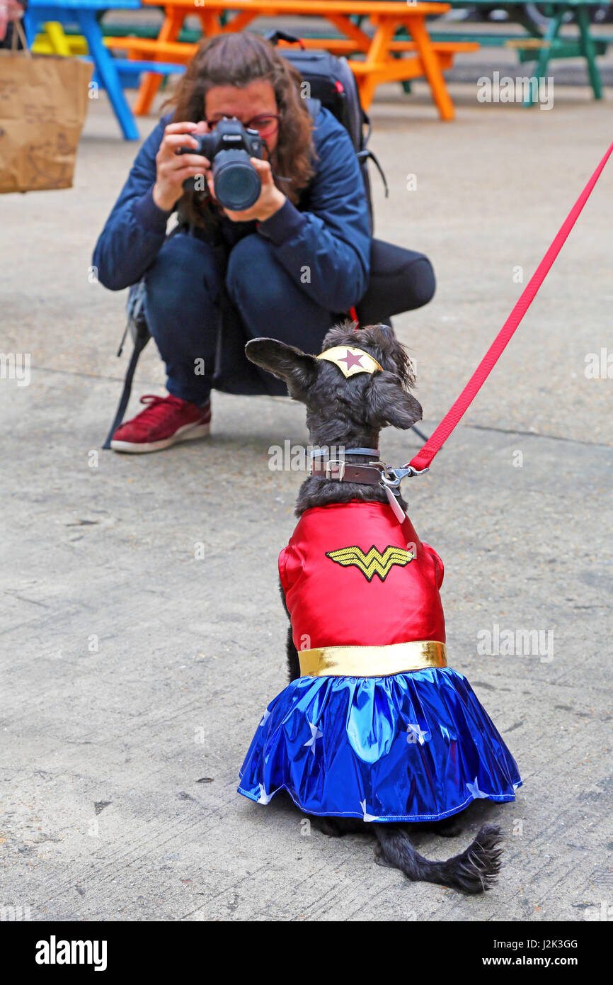 London, UK. 29th April 2017. Martha the Schnoodle (Schnauzer / Poodle cross) who won third prize dressed as Wonder - Stock Image