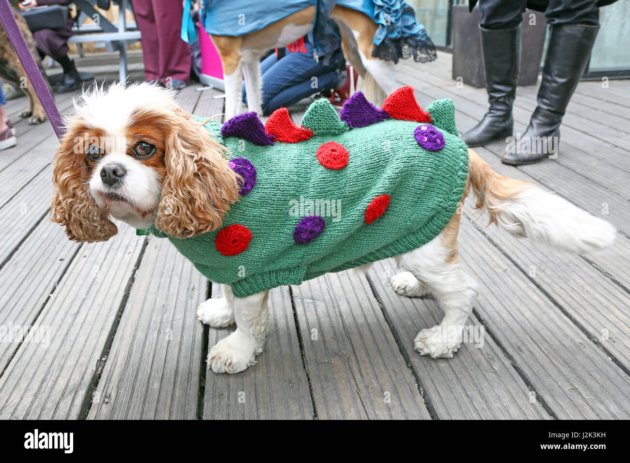 London, UK. 29th April 2017. Dashy the Cavalier King Charles Spaniel dressed as Dogzilla at the Sci-Fido cosplay - Stock Image