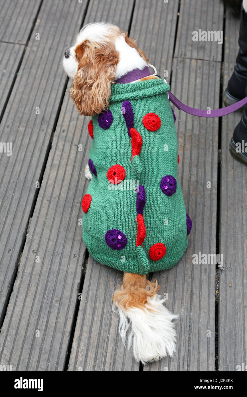 London, UK. 29th April 2017. Dashy the Cavalier King Charles Spaniel dressed as Dogzilla at the Sci-Fido cosplay Stock Photo