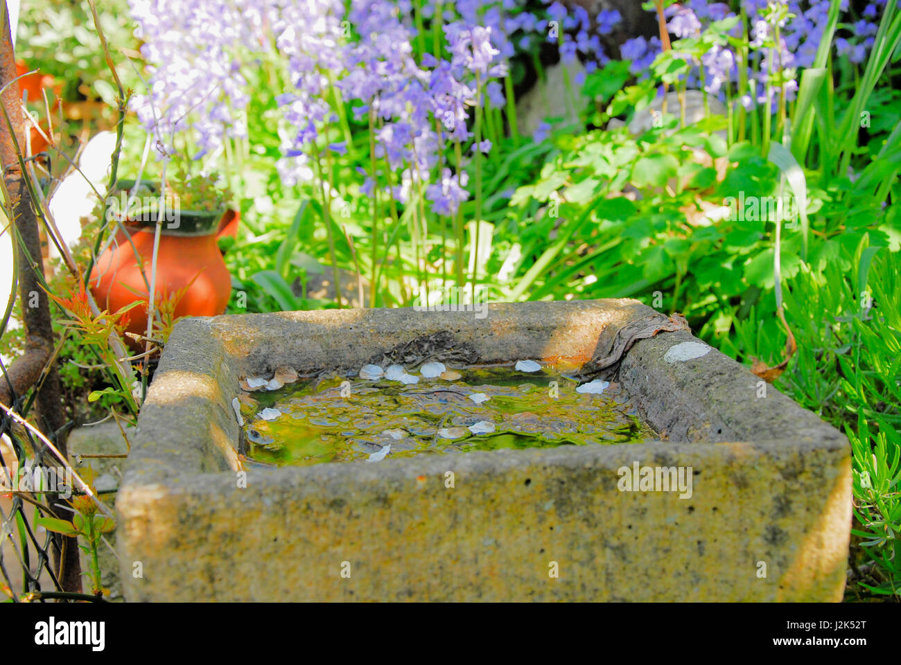 Portland, Dorset, UK. 29th April, 2017. Cherry blossom falls into a bird-bath on a sunny day in Portland Credit: - Stock Image