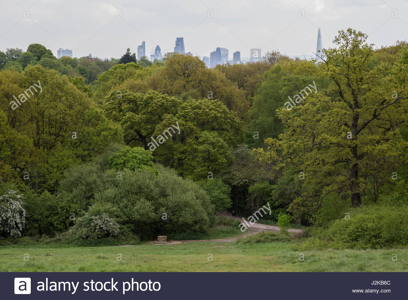 (L-R) Guerkin, Cheesegrater, Walkie-Talkie and Shard buildings seen over treetops from Hampsted Heath park in north - Stock Image