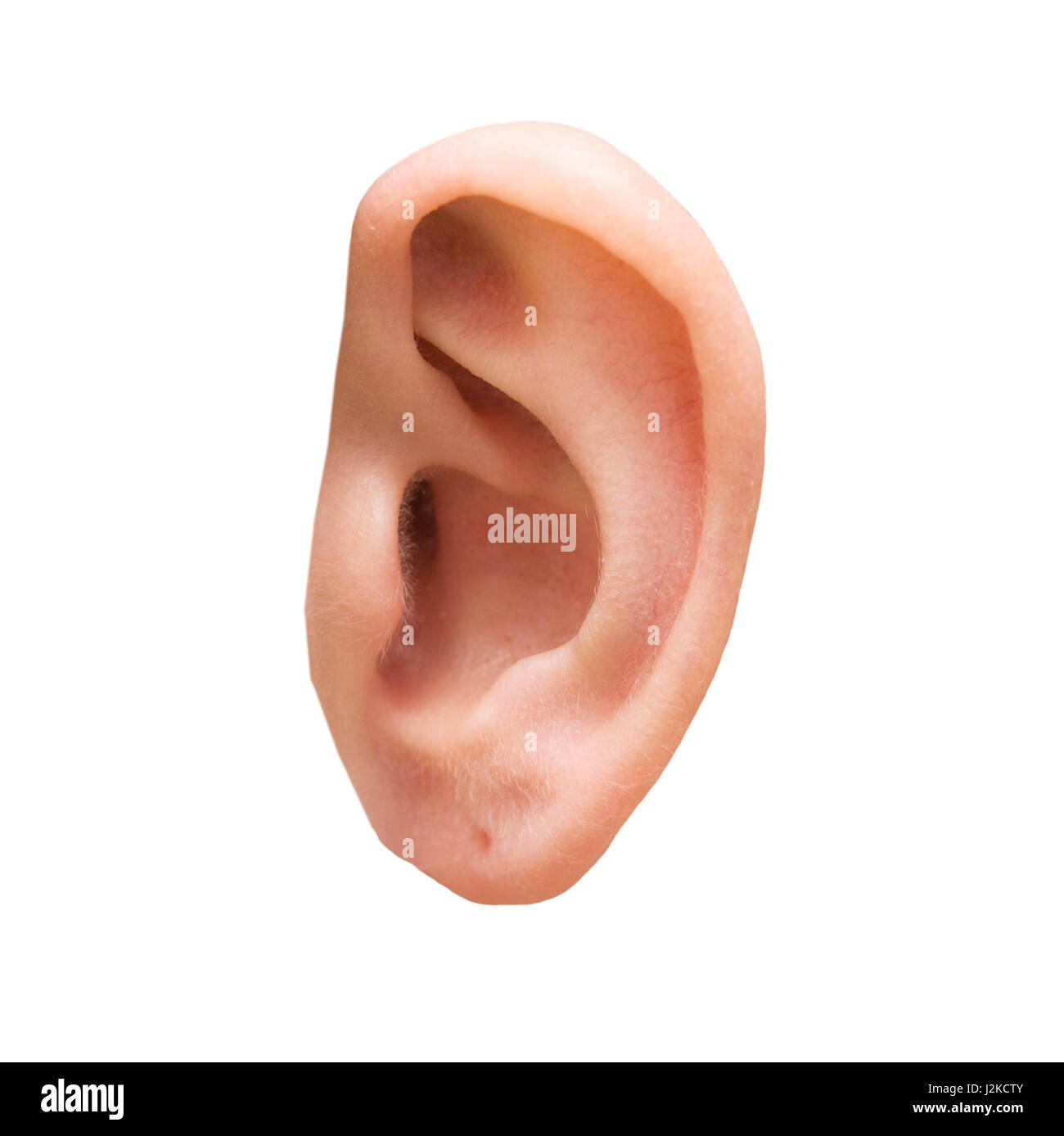 Ear Lobe Cut Out Stock Images & Pictures - Alamy
