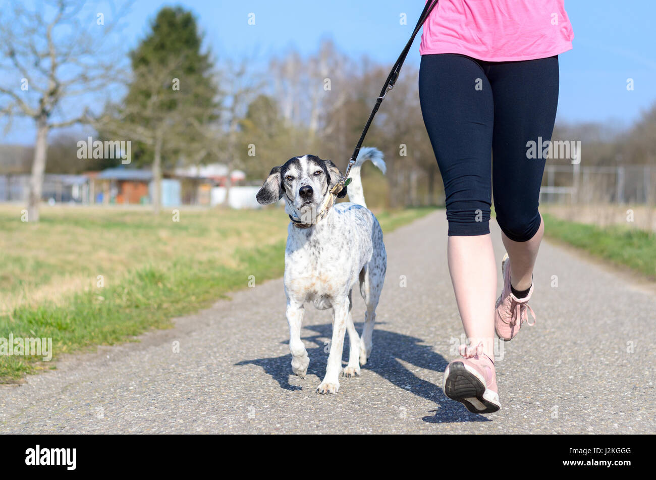 Fit athletic young woman running with her dog on a lead jogging along a rural lane in the sunshine, close up view - Stock Image