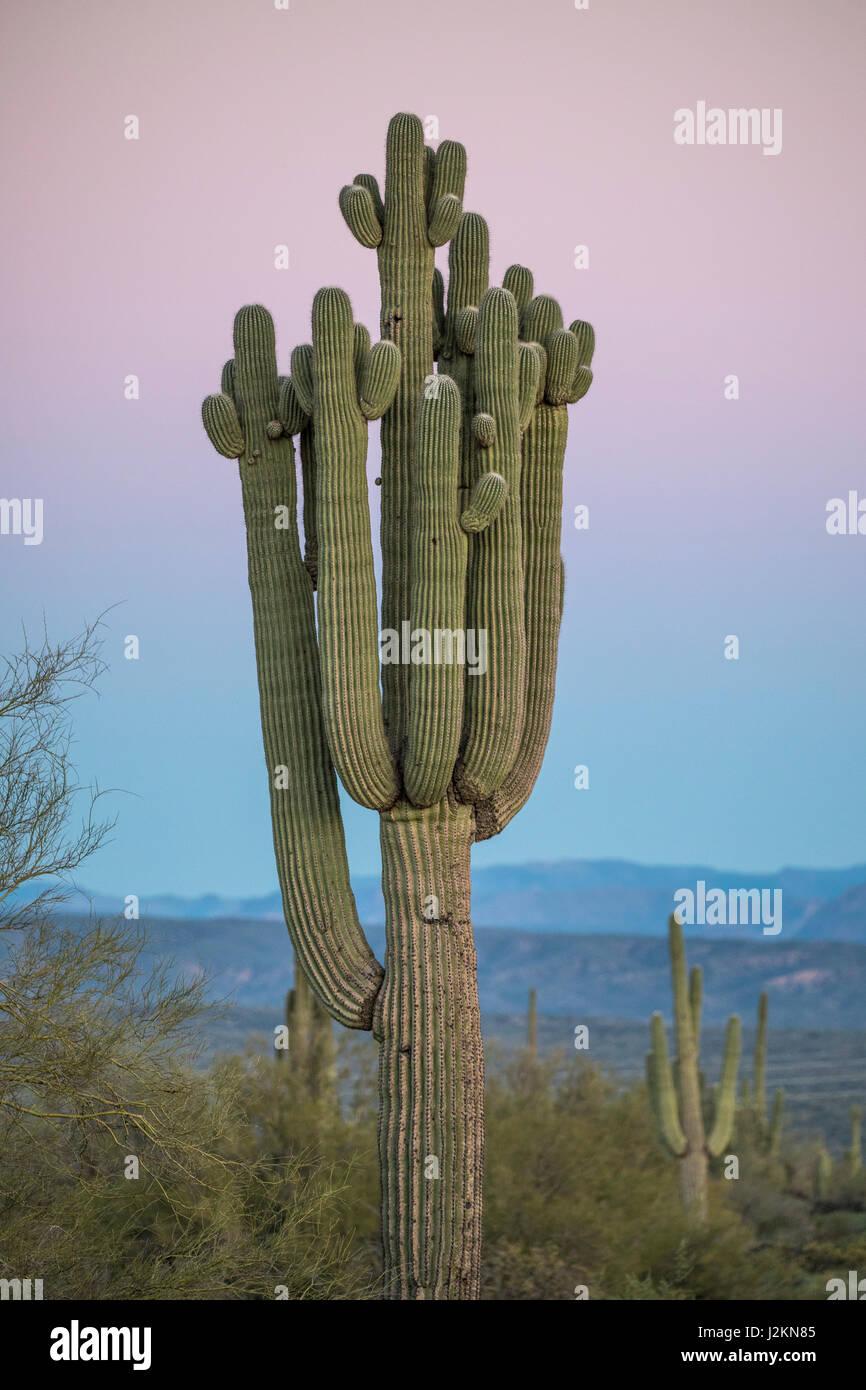 McDowell Mountain Park, Phoenix, Arizona. - Stock Image