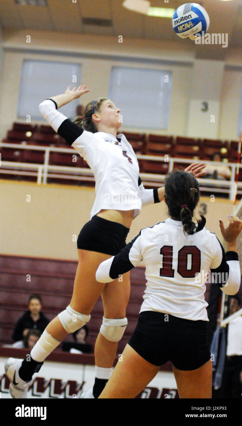 An Elon University Volleyball player prepares to spike a ball over the net during a match. - Stock Image