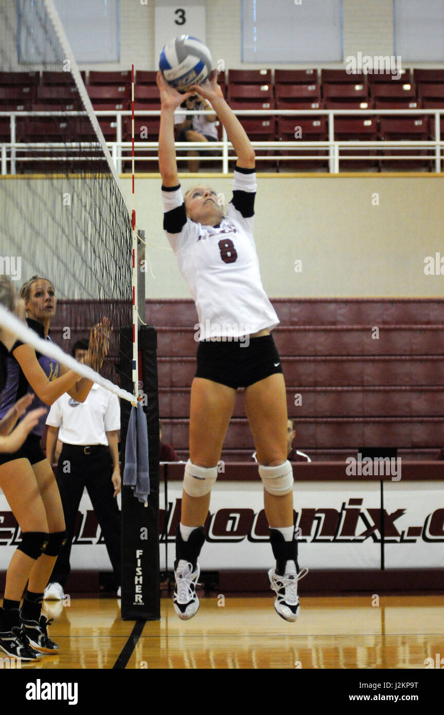 An Elon University Volleyball player sets  a ball up for a spike. - Stock Image