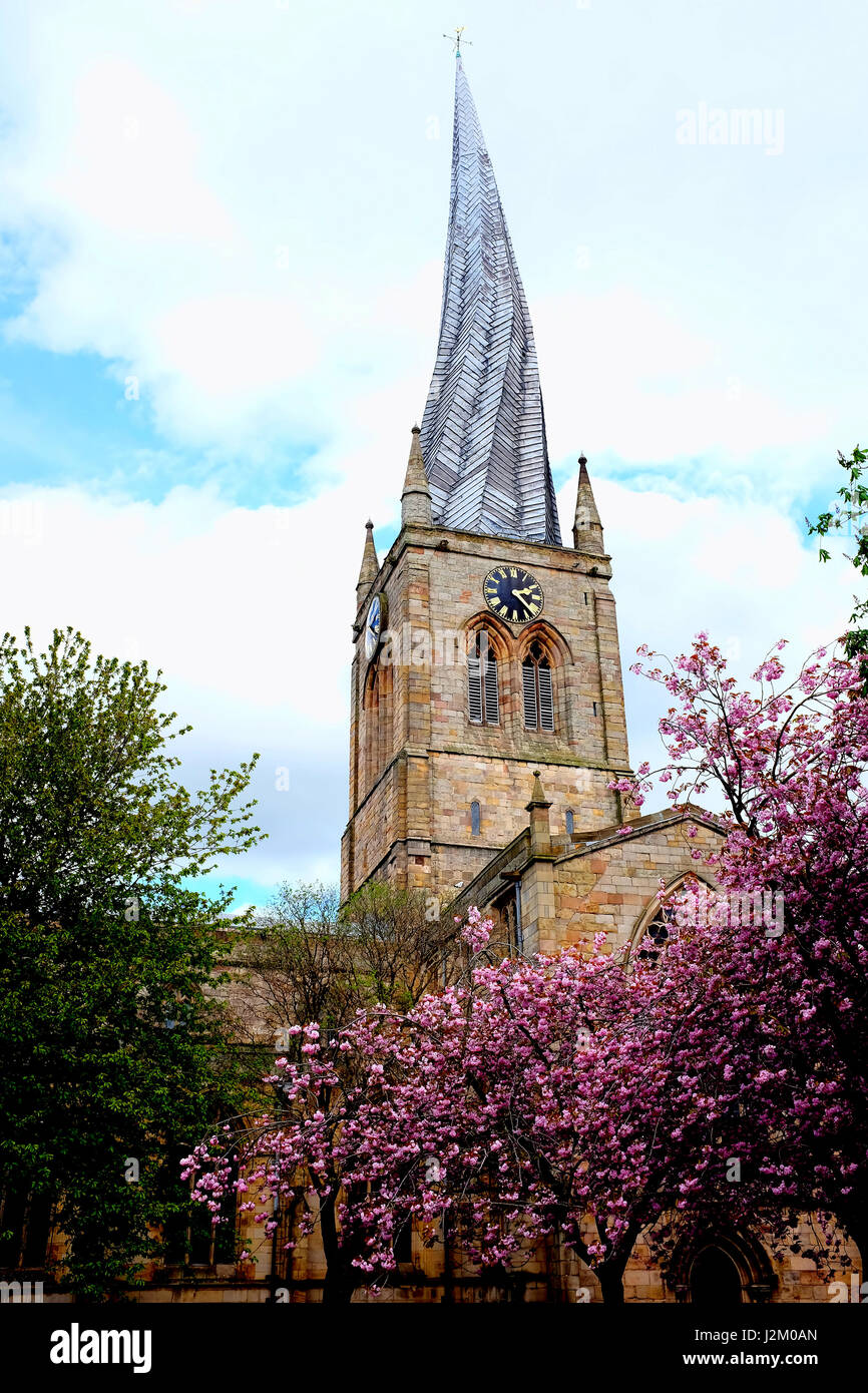 Chesterfield, Derbyshire, UK. April 24, 2017.  The famous Cooked spire in the Spring with blossom at Chesterfield - Stock Image