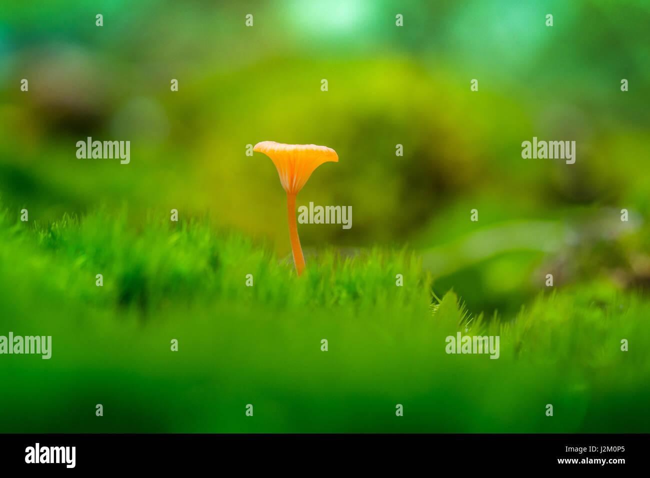 Orange Mushroom on Green Background - Stock Image