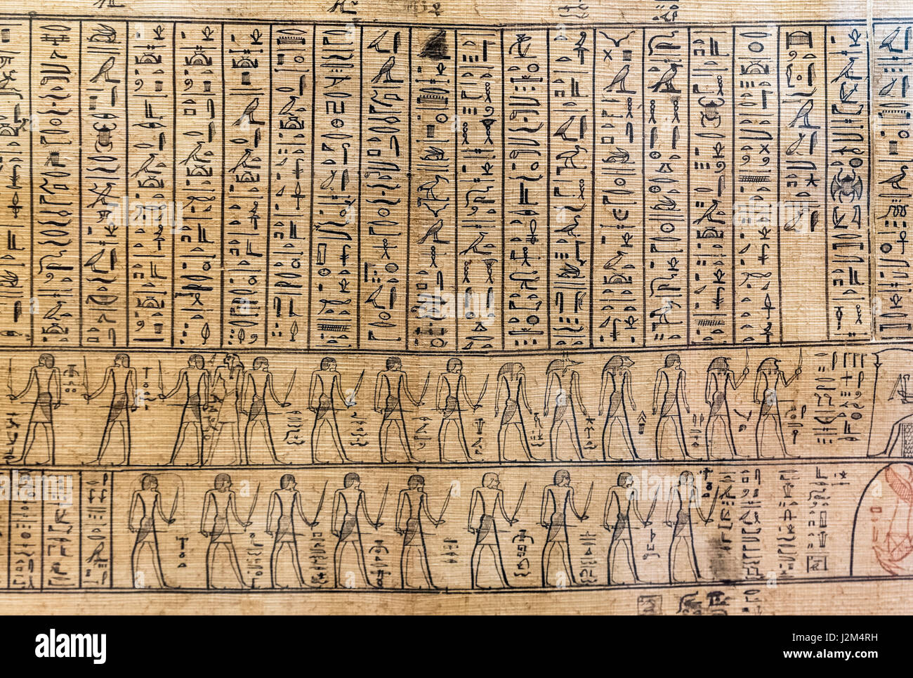 Hieroglyphics. Egyptian hieroglyphs on a portion of the Jumilhac Papyrus, dated from the late Ptolemaic or early - Stock Image