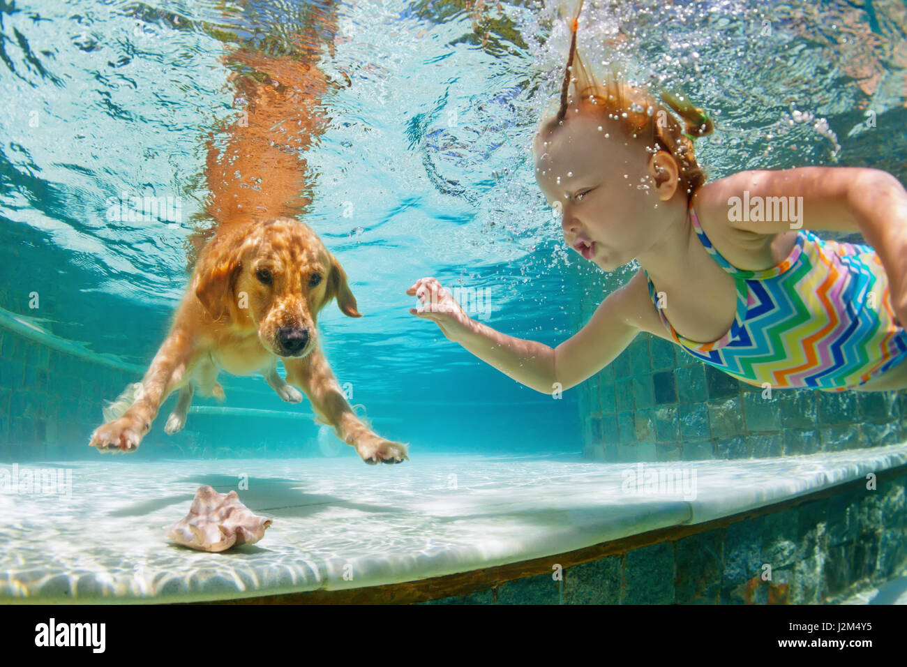 Underwater action. Smiley child play with fun, training golden retriever puppy in swimming pool - jump and dive. - Stock Image