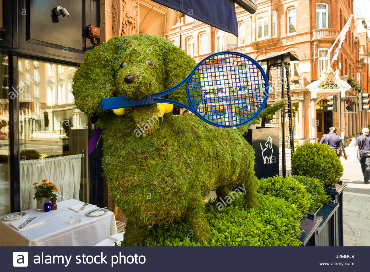 Topiary of dog with tennis racket in mouth outside of George private members club, Mount Street, Mayfair, City of - Stock Image