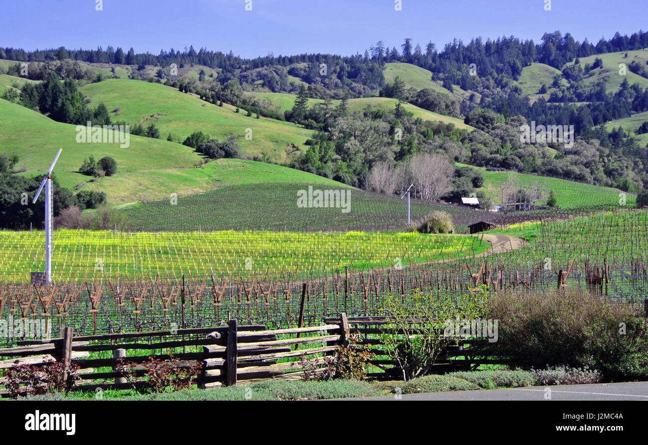 view of anderson valley vineyard - Stock Image