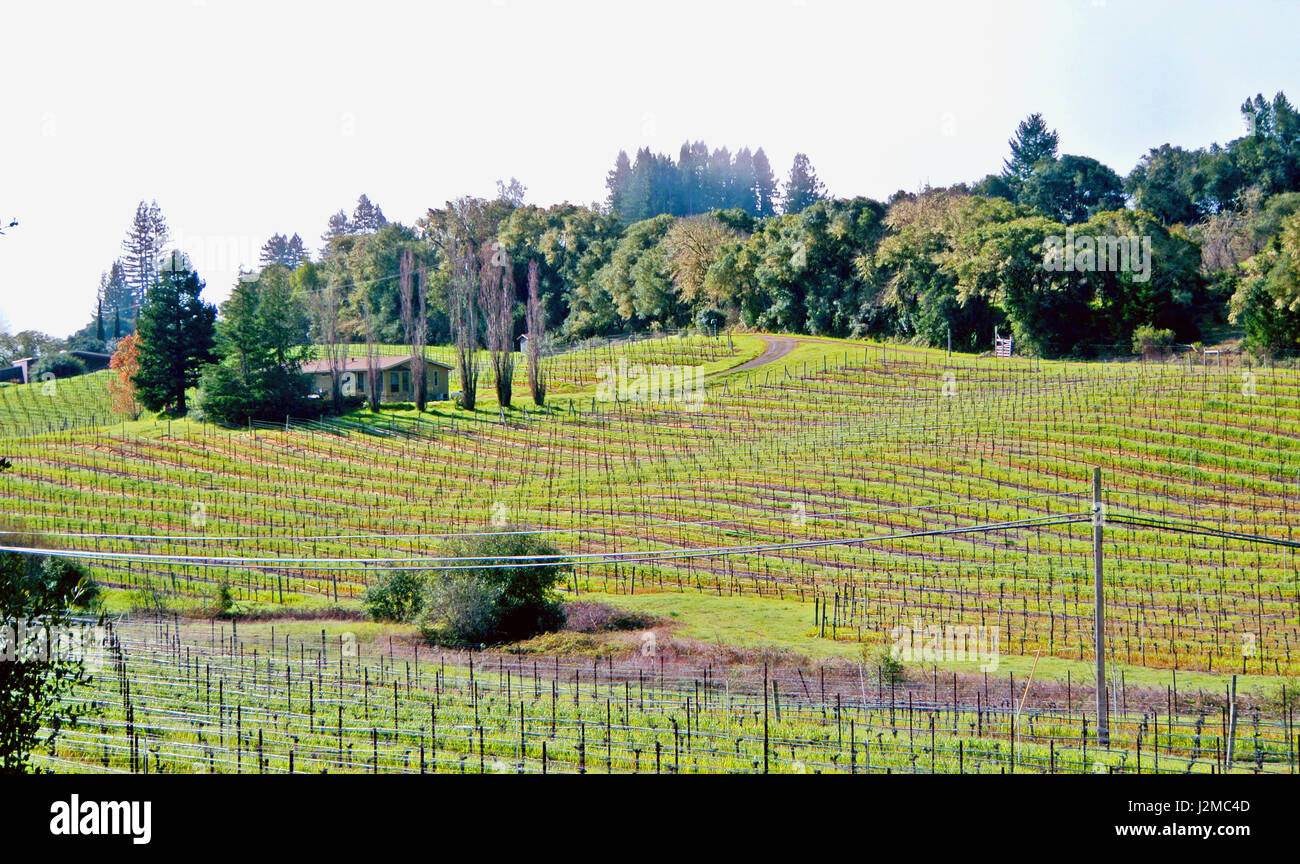 view of anderson valley wineries - Stock Image