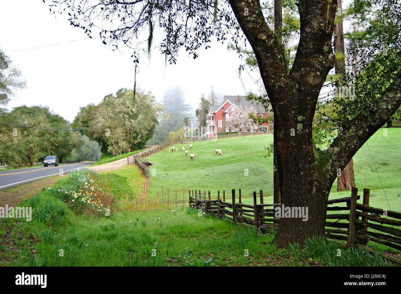 view of farmhouse with sheep on highway 128 in the anderson valley wine country of northern california - Stock Image
