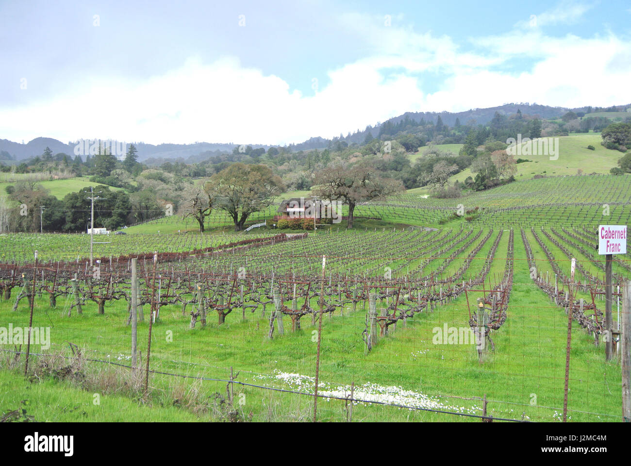 vineyard alongside hwy 129 in Anderson Valley, Mendocino County CA usa Stock Photo