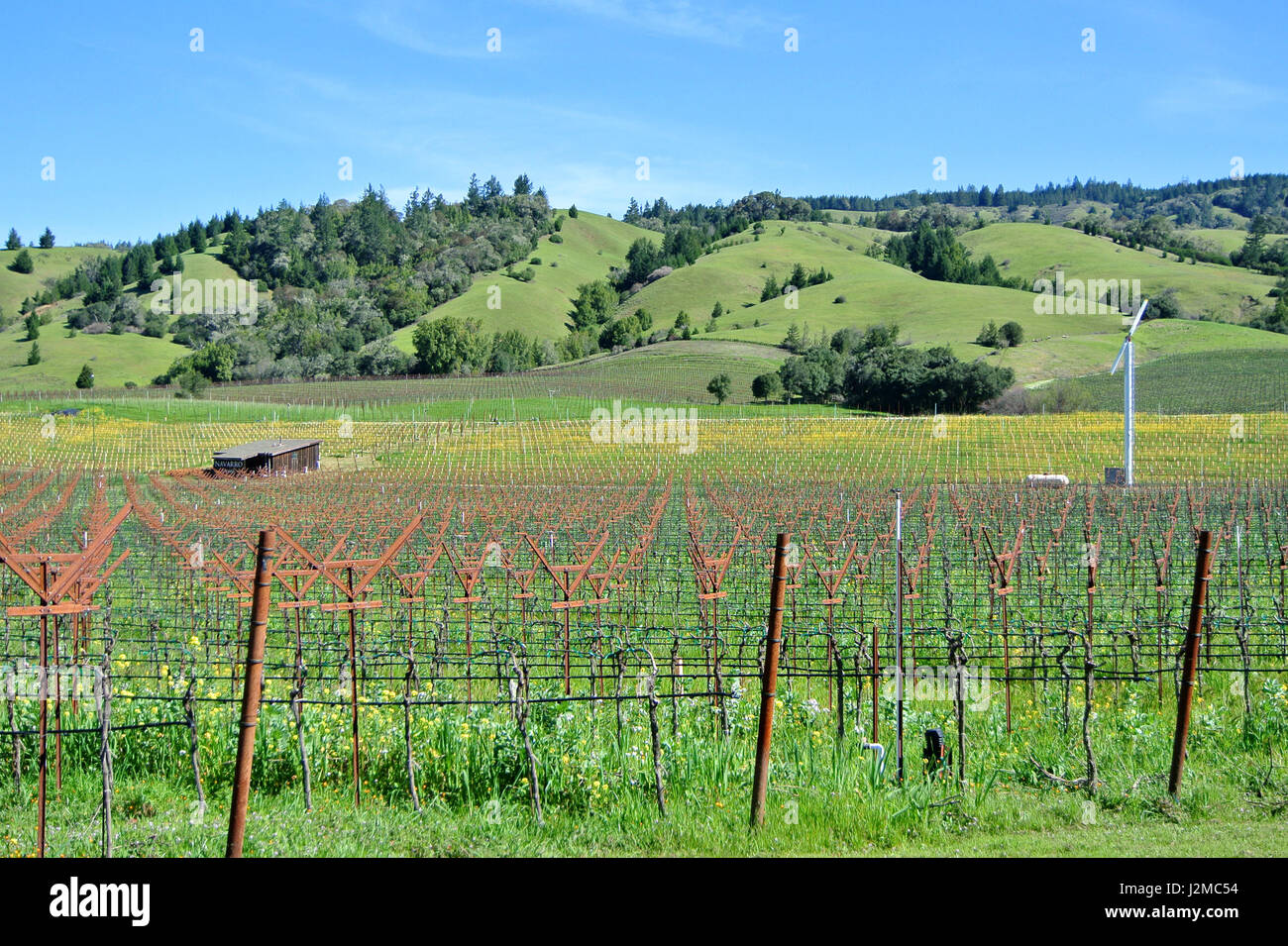 anderson valley vineyard - Stock Image