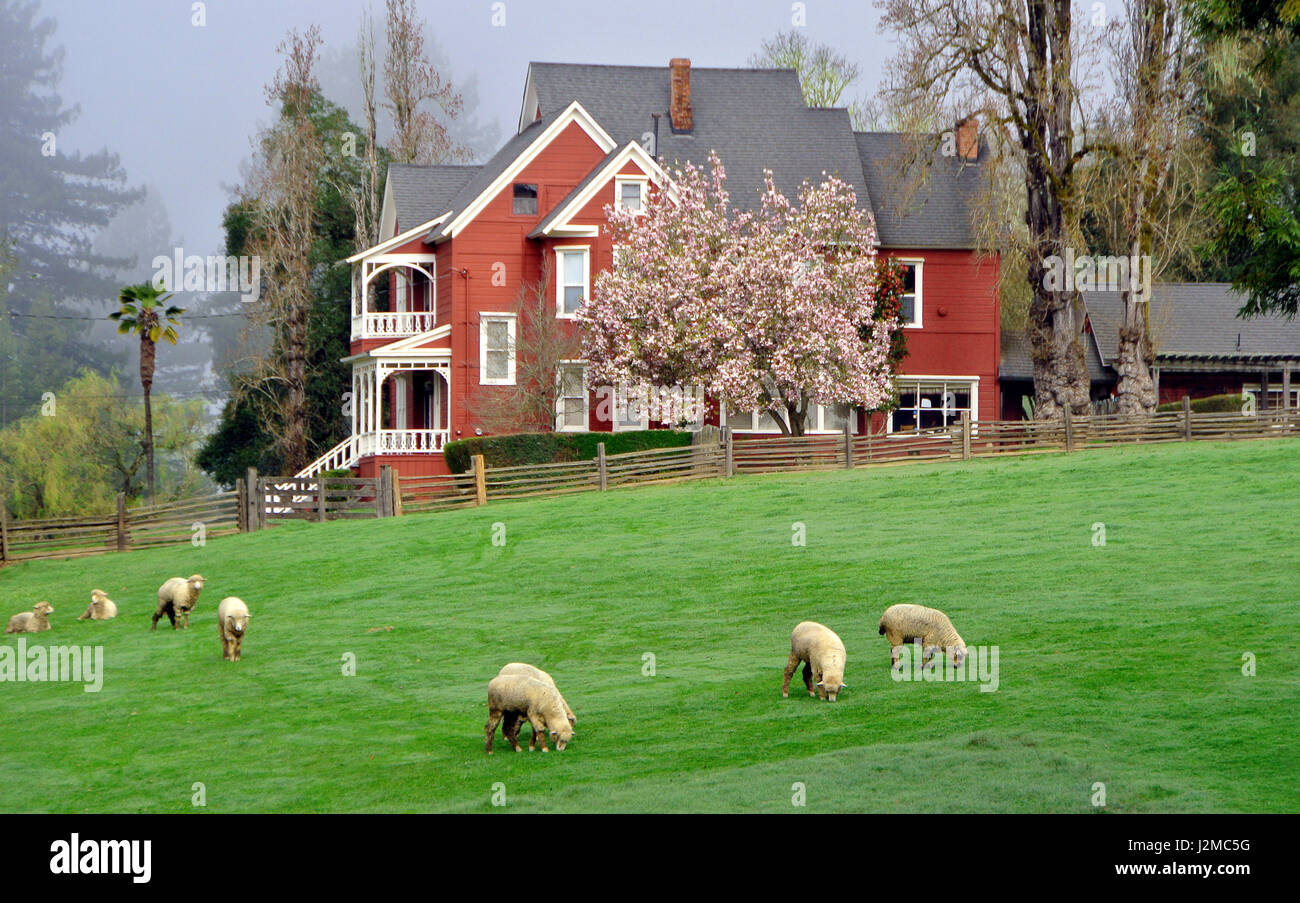 farmhouse on highway 129 in the anderson valley wine country Stock Photo