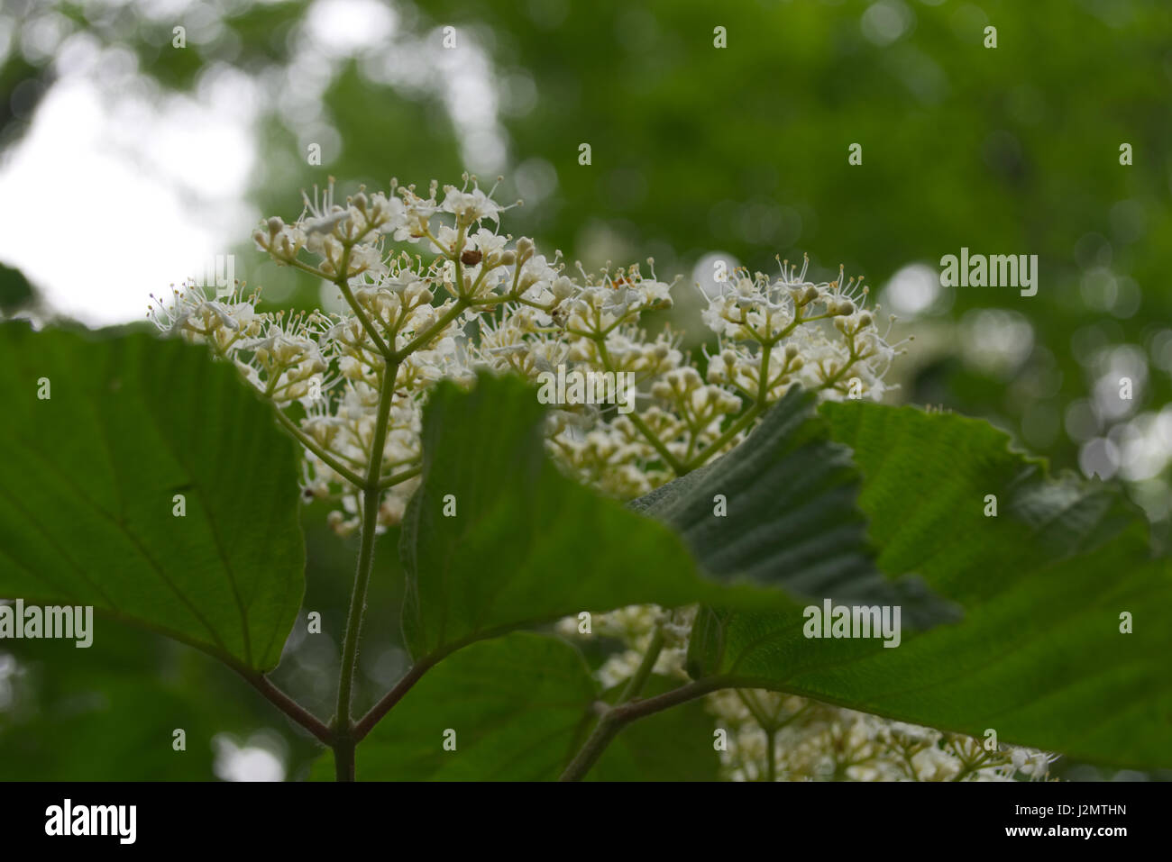 Close up photos of flowers, plants and trees - Stock Image
