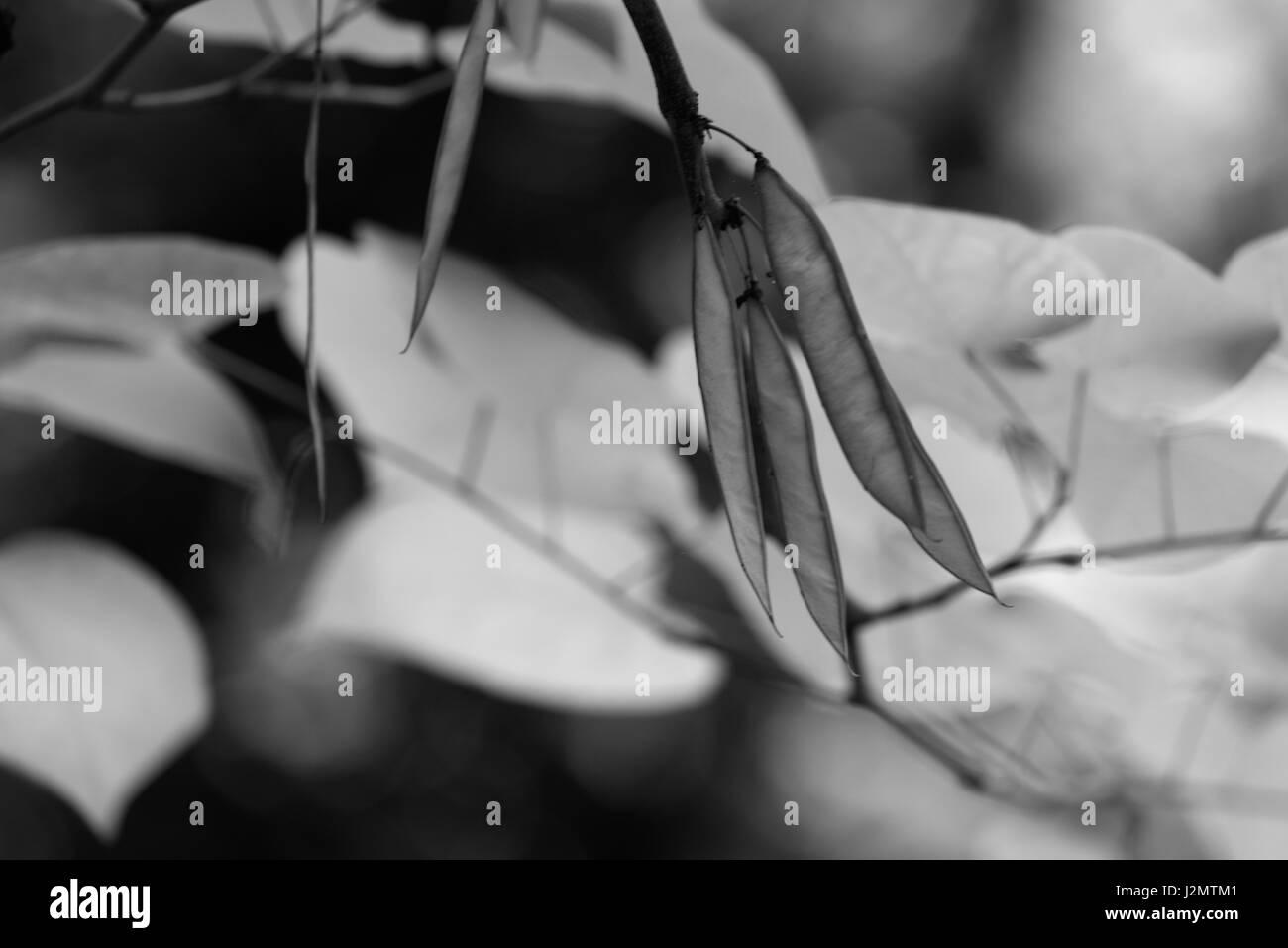 Black and White photos wildlife, plants, trees Stock Photo
