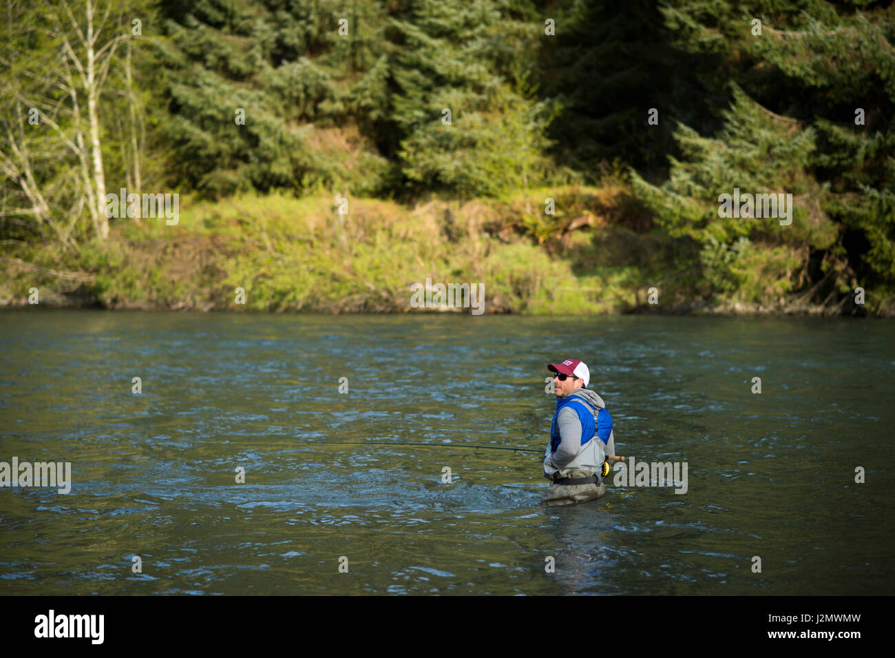 Angler Fly Fishing for Steelhead on the Queets River, Olympic Peninsula, Washington - Stock Image