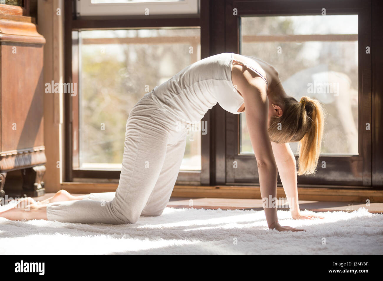 Young yogi attractive woman practicing yoga concept, standing in asana paired with Cow Pose on the inhale, Cat exercise, - Stock Image