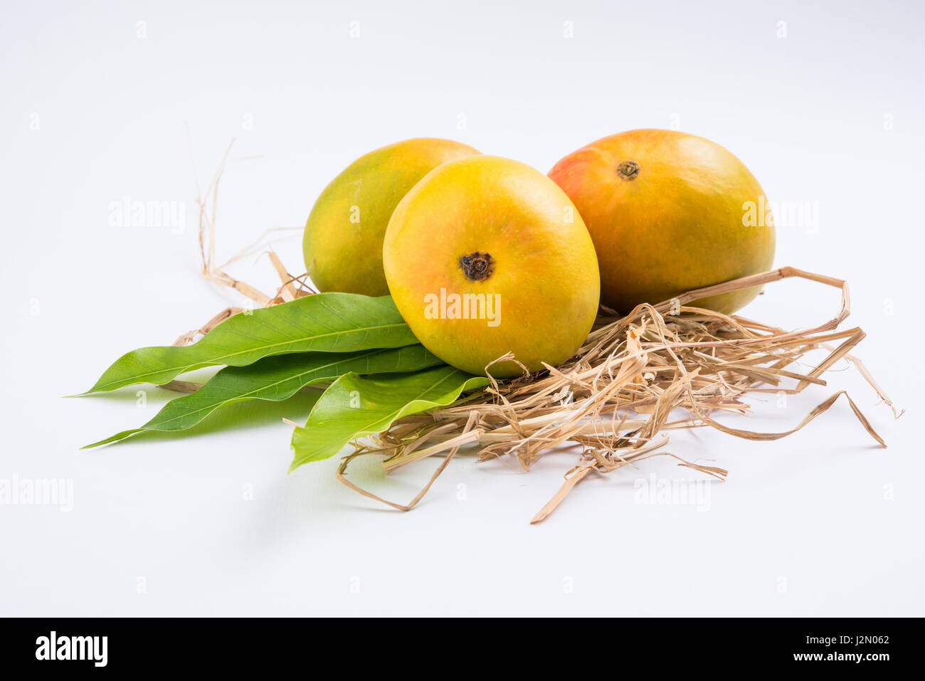 king of fruits alphonso yellow mango fruit duo with stems and green J2N062