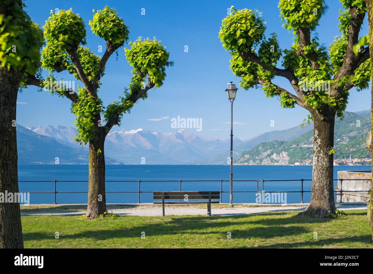 pollarded Plane trees along tree lined waterfront at Bellagio, Lake Como, Italy in April Stock Photo