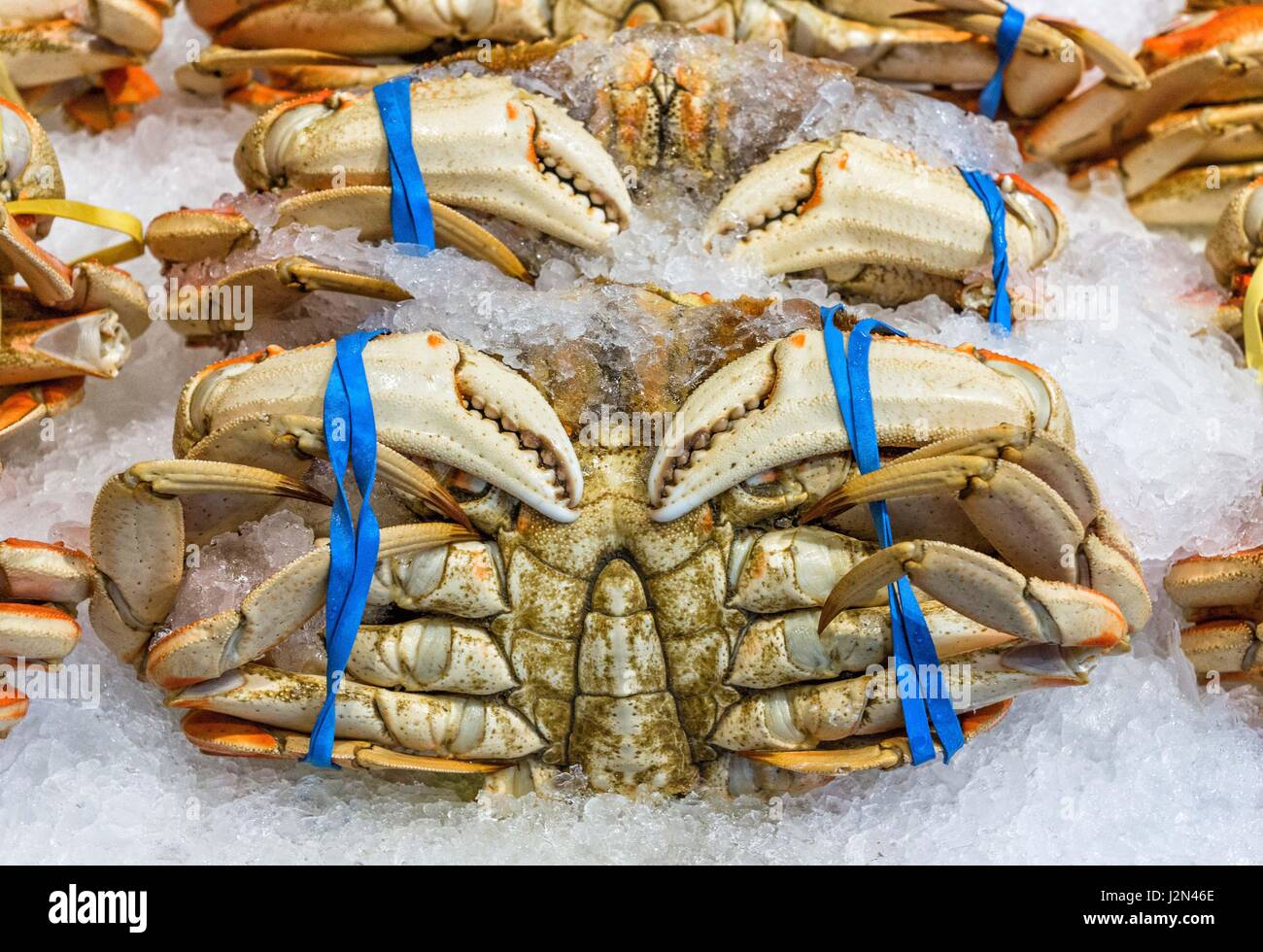 Dungeness, Crab's on sale at a fish market - Stock Image