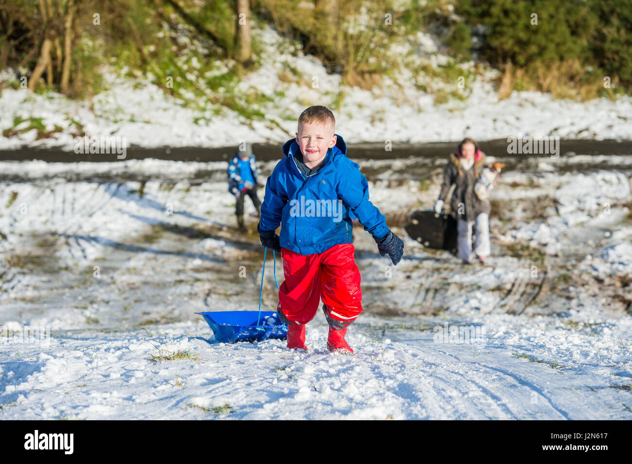 Photographer Ian Georgeson, 07921 567360 TJay Barclay (6) sledging in Penicuik - Stock Image
