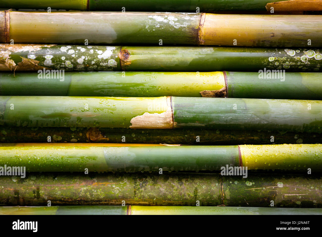 Green bamboo wall texture Stock Photo: 139381280 - Alamy