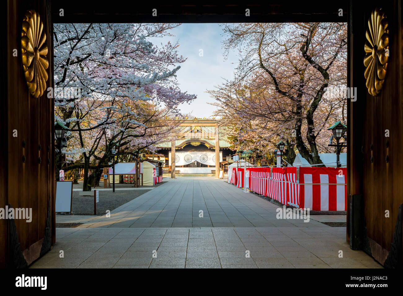 Cherry blossom at Yasukuni Shrine, Tokyo, Japan. a famous Tourist spot in Tokyo, Japan. - Stock Image