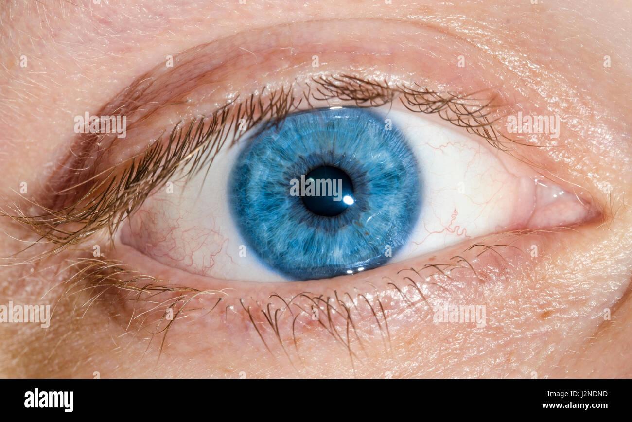 pretty blue eyes macro of a human blue eye of a caucasian