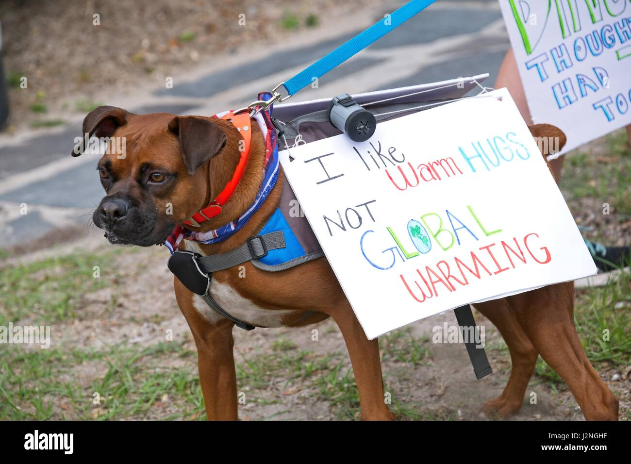 Charleston, South Carolina, USA. 29th Apr, 2017. A dog is decorated with a protest sign during the People's - Stock Image