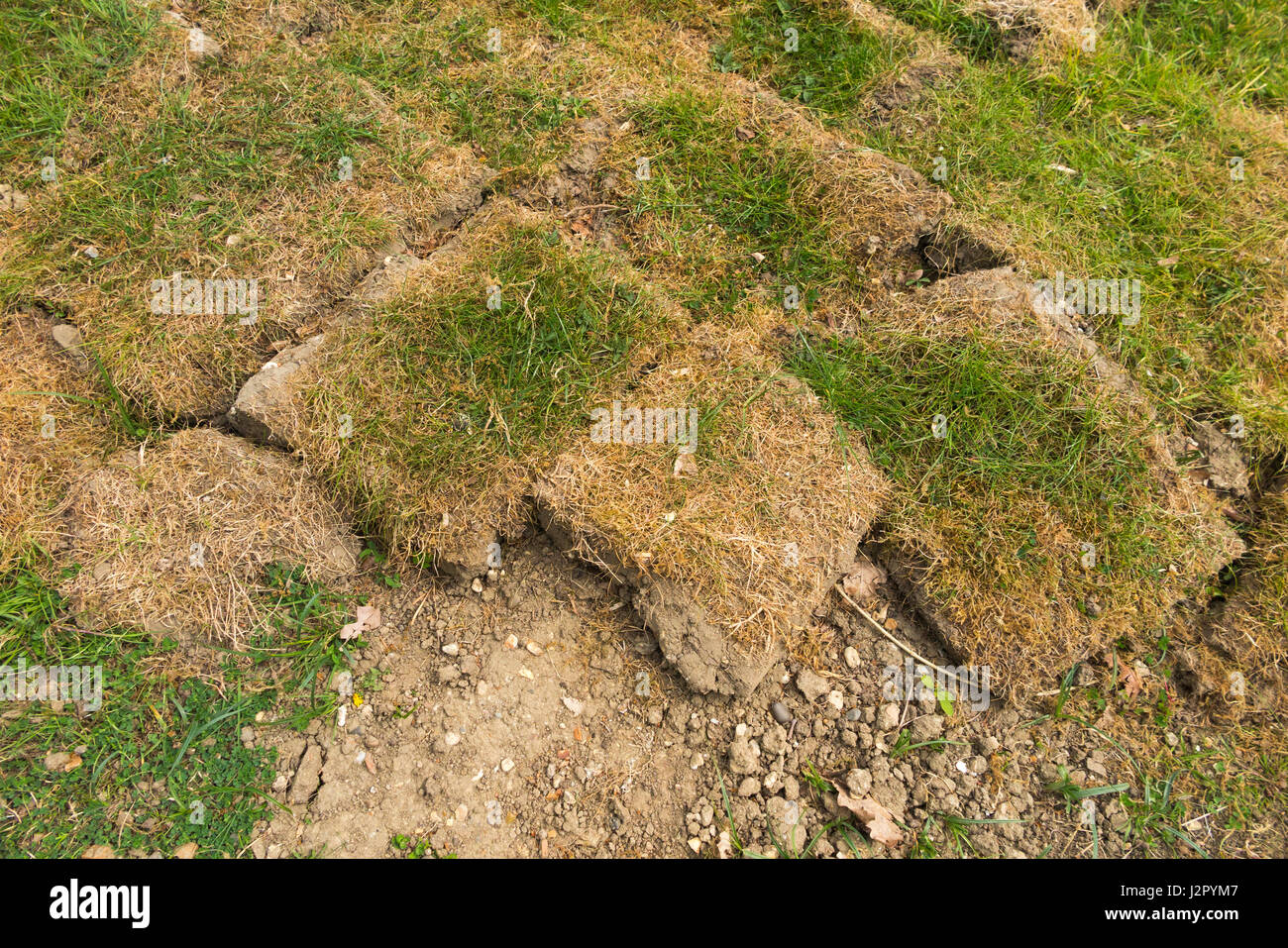 Very badly laid turf / grass / lawn which hasn't bonded with the stony ground / soil beneath and has grown in patches. Stock Photo