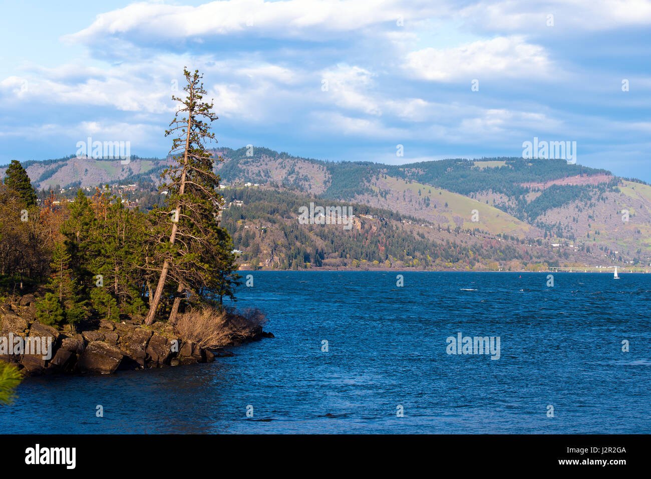 Island of evergreen trees growing on rocks on the shore of the Columbia River, in the sun on the background of river - Stock Image