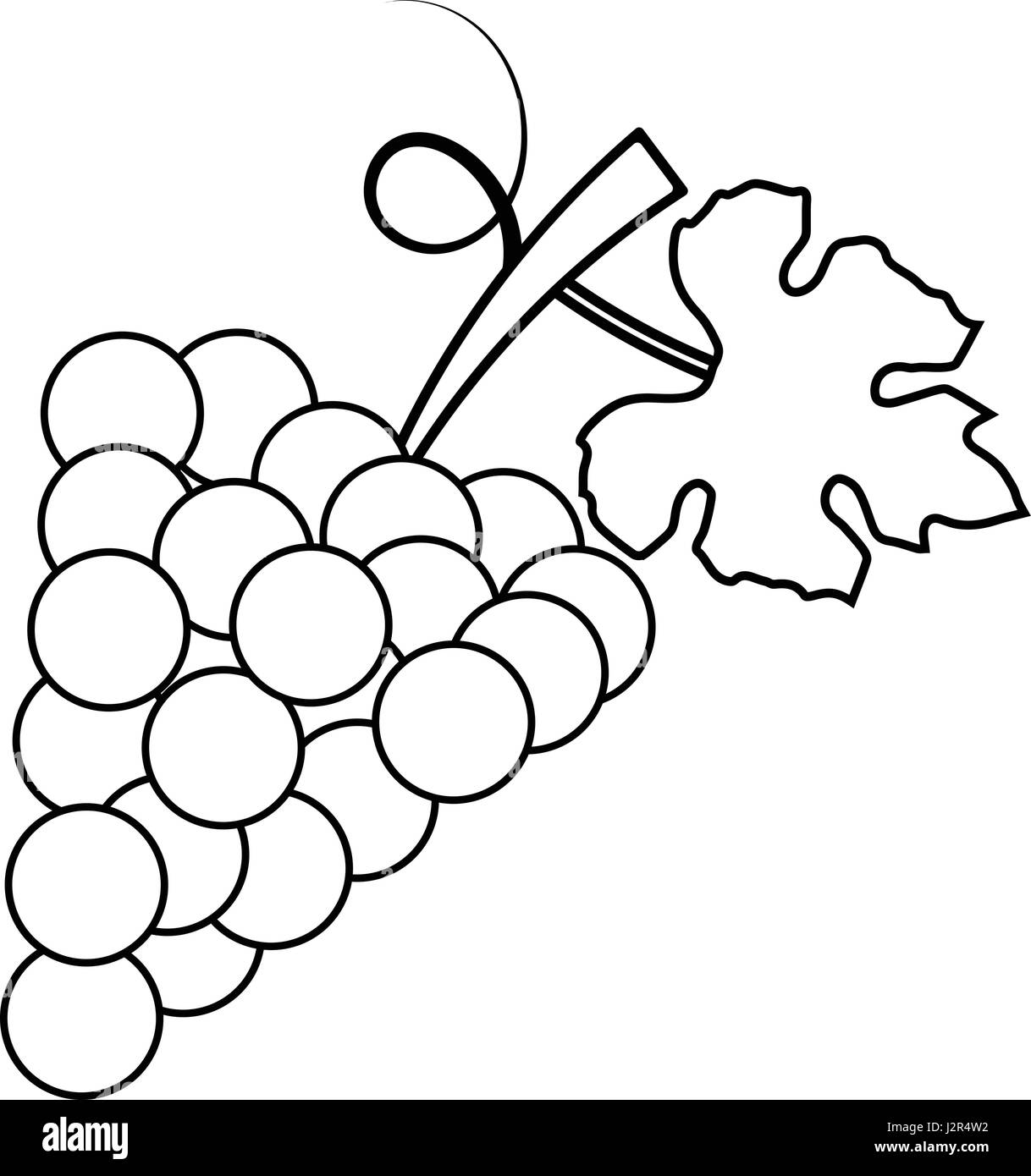 Bunch Of Grapes Black and White Stock Photos & Images - Alamy