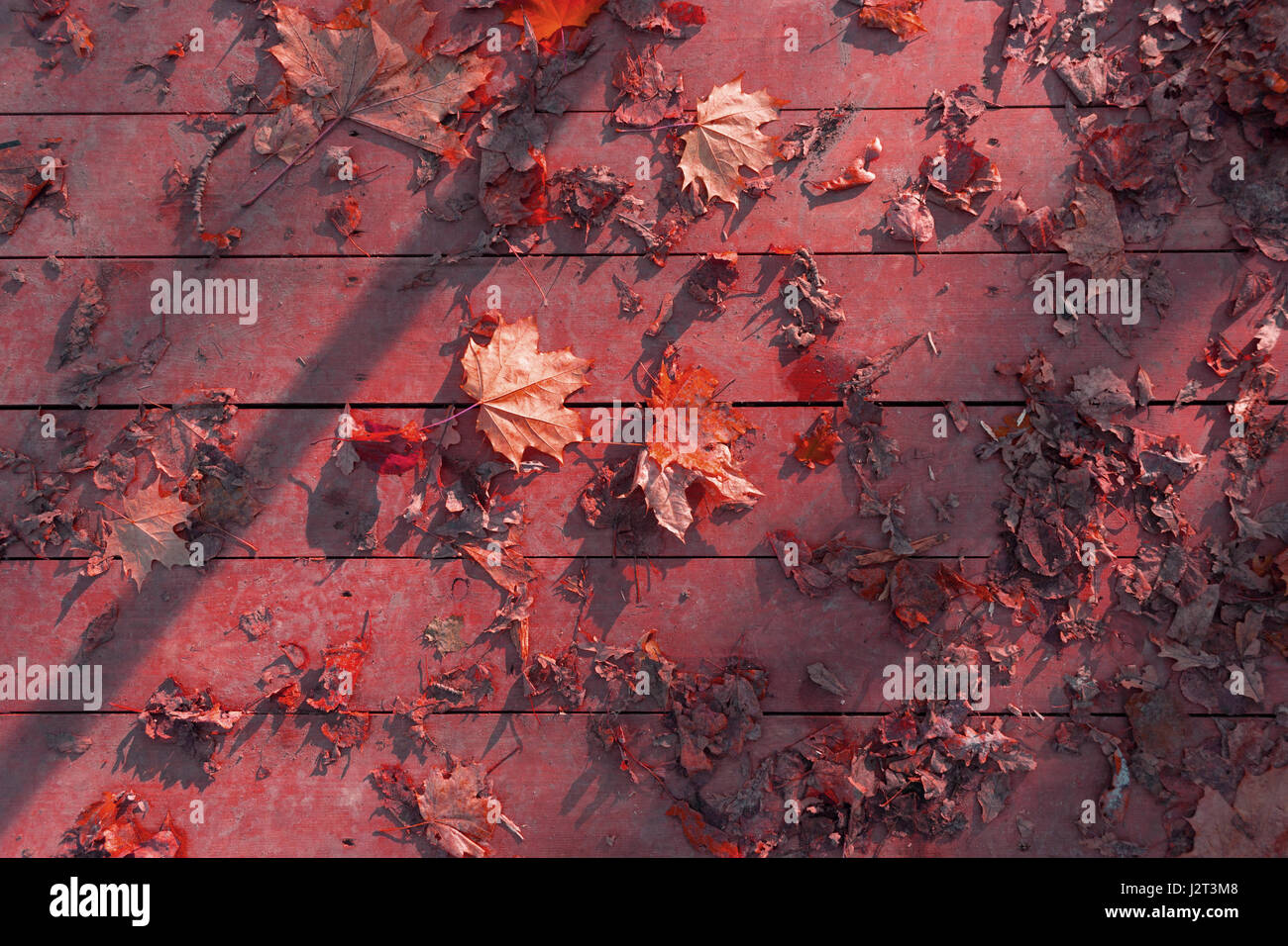 autumn leaves on wooden surface. sunlight and shaddow - Stock Image