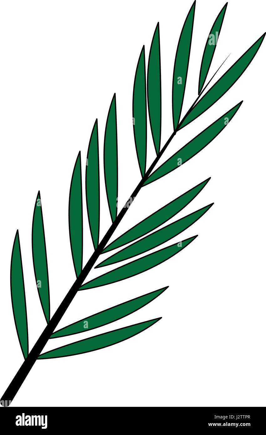 color image branch with elongated leaves - Stock Image