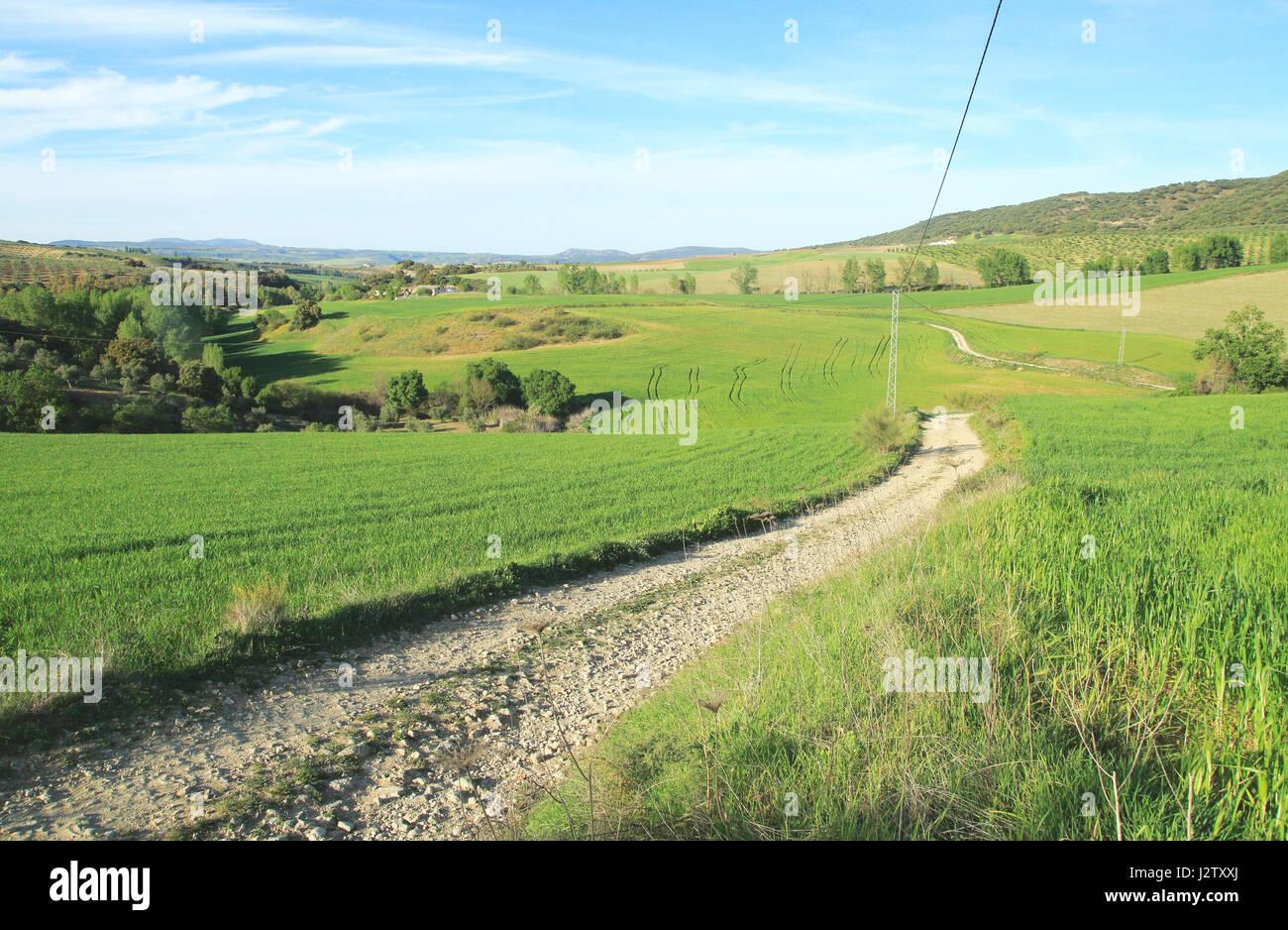 Farming landscape of Rio Setenil valley, Cuevas del Marques, Serrania de Ronda, Spain - Stock Image