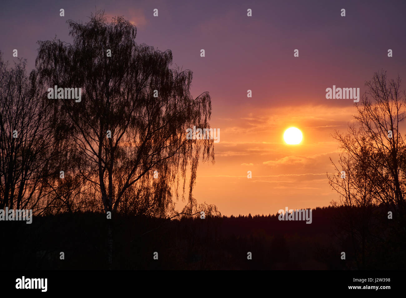 Orange - magenta sunset with a weeping willow in the foreground. - Stock Image