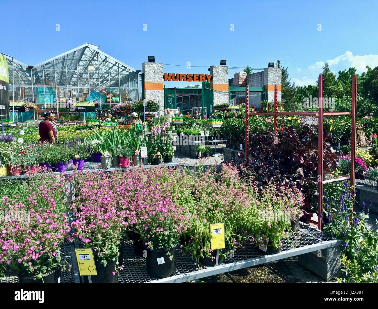 Home Depot Nursery Filled With Fresh Plants Flowers And