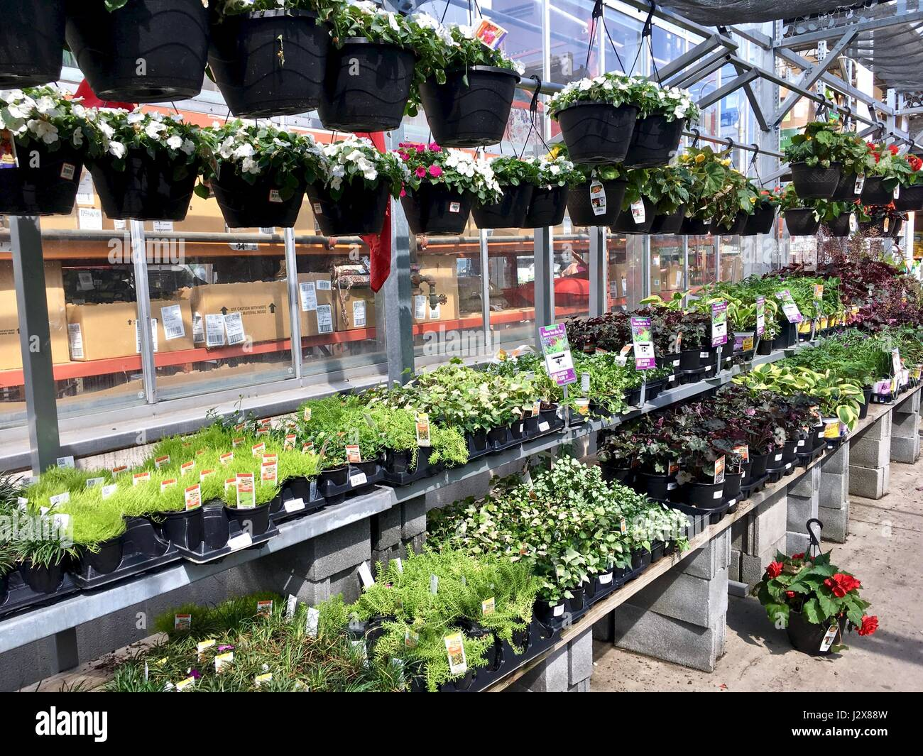 The Home Depot Outdoor Nursery With Garden Plant And Flowers Stock