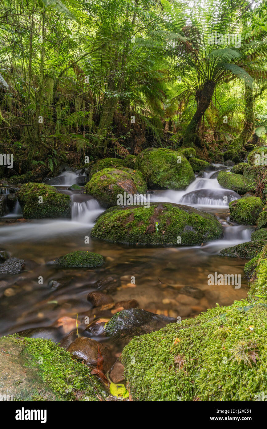 Long exposure of a small waterfall, with a silky look, surrounded by lush vegetation and rocks covered with moss. - Stock Image