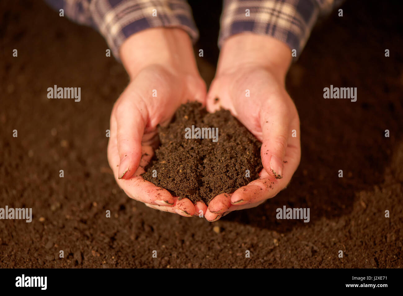 Handful of arable soil in hands of responsible female farmer, close up, selective focus - Stock Image