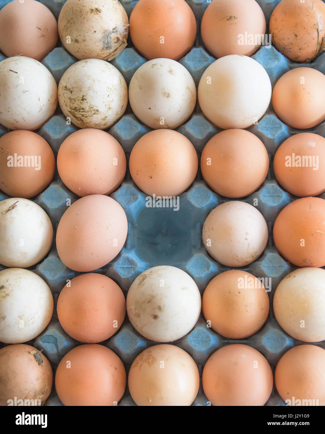 A tray of very fresh unwashed eggs Shells Natural Nature Source of Protein Free range eggs Organic Eggshell Eggshells - Stock Image